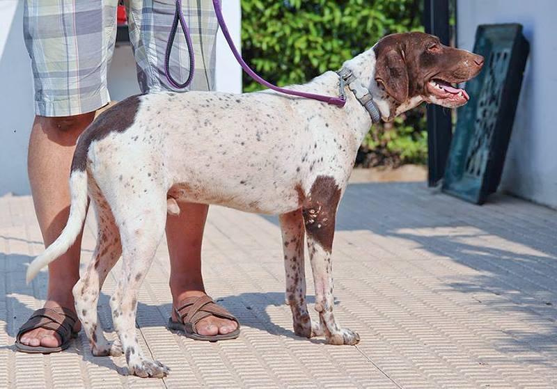 Bildertagebuch - Guiness: ein Hundekumpel fürs Leben - VERMITTELT - 30455667vl