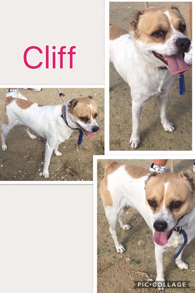 Bildertagebuch - Cliff: Menschen mit großem Herz gesucht - VERMITTELT! 30658164qn