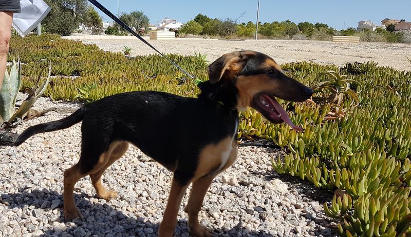 Bildertagebuch - Hannah (Storm), Sie sind auf der Suche nach einem kleinen Hundemädchen das Ihr Leben bereichern soll ? VERMITTELTT! 30675872oq
