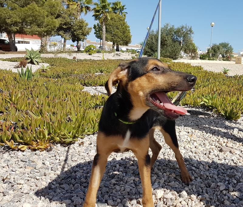 Bildertagebuch - Hannah (Storm), Sie sind auf der Suche nach einem kleinen Hundemädchen das Ihr Leben bereichern soll ? VERMITTELTT! 30675874xp