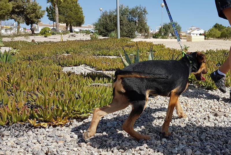 Bildertagebuch - Hannah (Storm), Sie sind auf der Suche nach einem kleinen Hundemädchen das Ihr Leben bereichern soll ? VERMITTELTT! 30675876lk