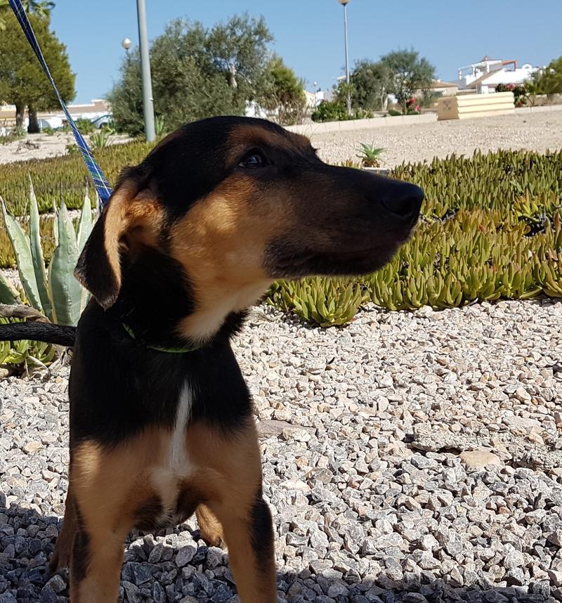 Bildertagebuch - Hannah (Storm), Sie sind auf der Suche nach einem kleinen Hundemädchen das Ihr Leben bereichern soll ? VERMITTELTT! 30675895hj