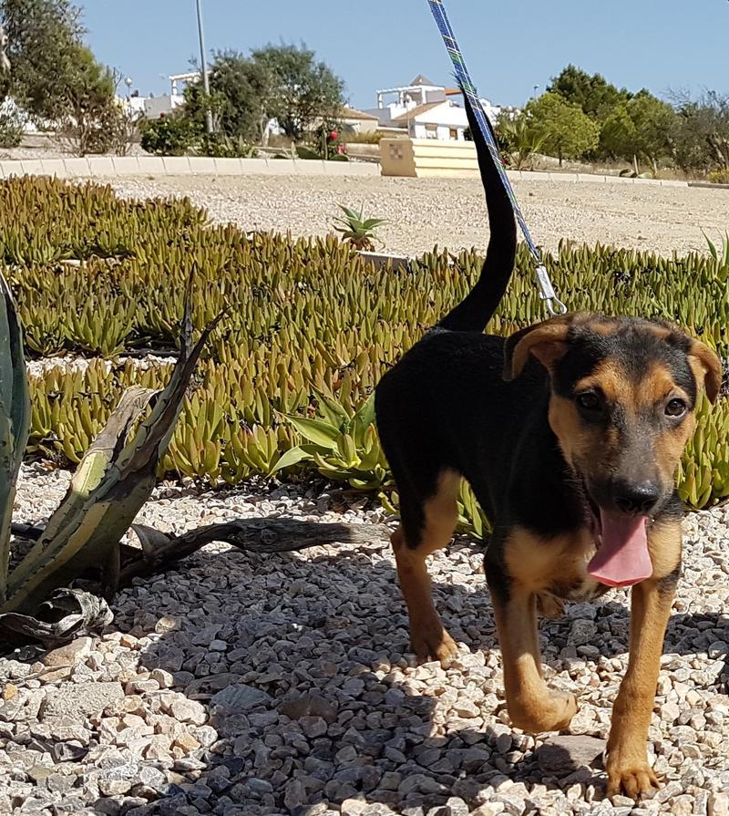 Bildertagebuch - Hannah (Storm), Sie sind auf der Suche nach einem kleinen Hundemädchen das Ihr Leben bereichern soll ? VERMITTELTT! 30675896jk