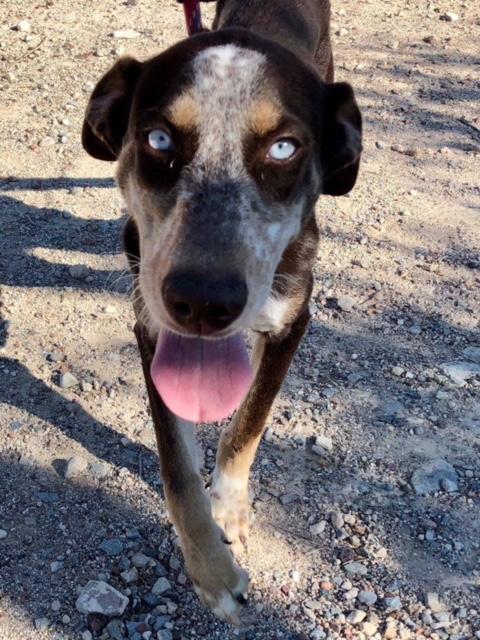 Bildertagebuch- Azul, nette sensible Hundedame mit wunderschönen blitzblauen Augen wünscht sich sehr eine Familie... - VERMITTELT! 30731898zw