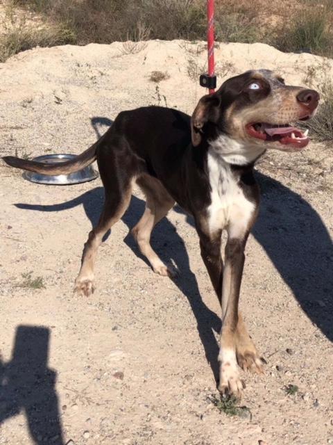Bildertagebuch- Azul, nette sensible Hundedame mit wunderschönen blitzblauen Augen wünscht sich sehr eine Familie... - VERMITTELT! 30731899lg