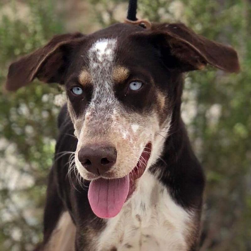 Bildertagebuch- Azul, nette sensible Hundedame mit wunderschönen blitzblauen Augen wünscht sich sehr eine Familie... - VERMITTELT! 30731900mt