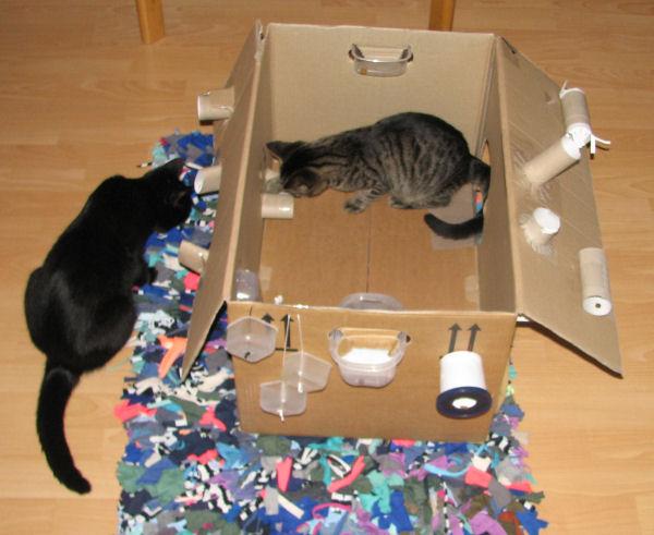 Die Besten Fummelbretter Oder Intelligenzspielzeug Katzen Forum