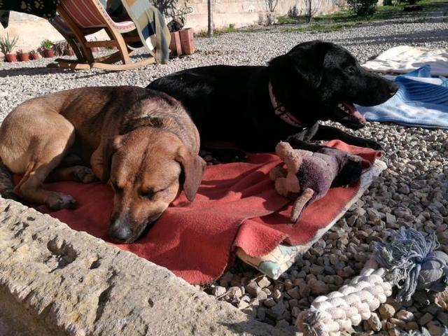hundenothilfe 4 pfoten