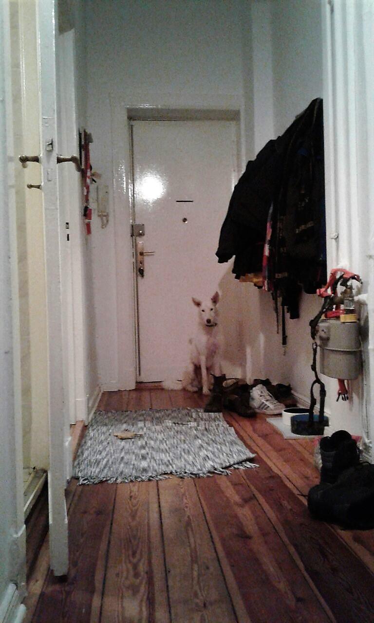 Bildertagebuch- Snowy, ein ganz bezauberndes schneeweißes Hunde-Mädchen die mehr und mehr abmagerte - VERMITTELT - 31098467ix