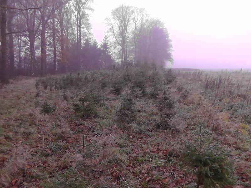 bäume mit dornen