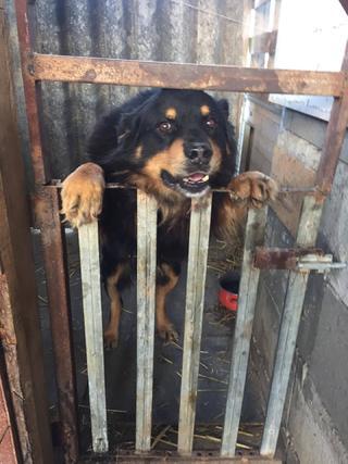 Maci hat ein neues Zuhause gefunden 31194415kg