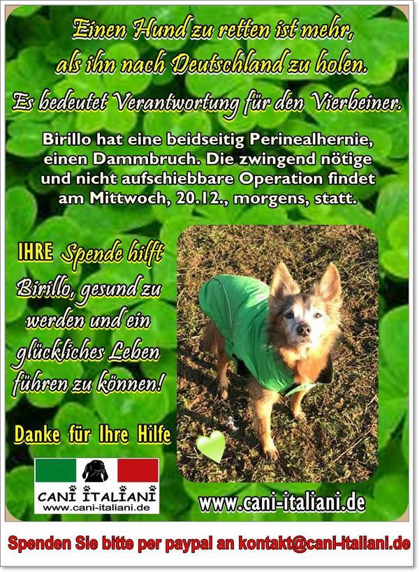 Hunde-Senior Birillo sucht ein Plätzchen 31288871ga
