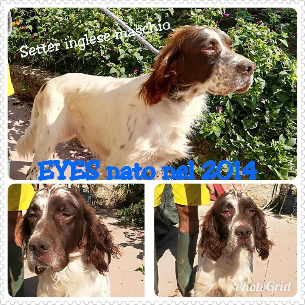 Bildertagebuch - Eyes, so jung und schon mit Handicap...ein Trauma nahm ihm sein Augenlicht... 31297860oa