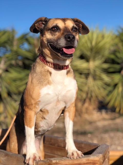 Bildertagebuch -  Ivy (jetzt Maja): eine kleine Hundelady hofft - VERMITTELT! 31333419qq