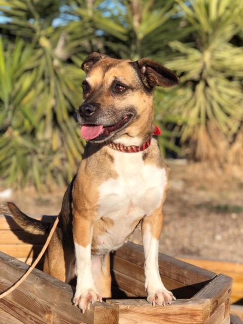 Bildertagebuch -  Ivy (jetzt Maja): eine kleine Hundelady hofft - VERMITTELT! 31333424nj