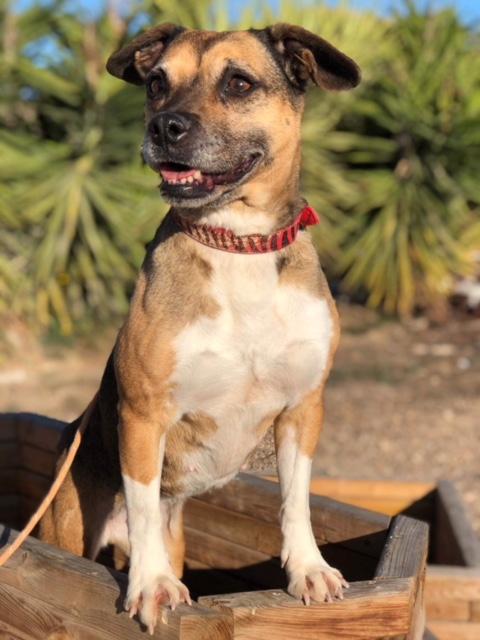 Bildertagebuch -  Ivy (jetzt Maja): eine kleine Hundelady hofft - VERMITTELT! 31333425fm
