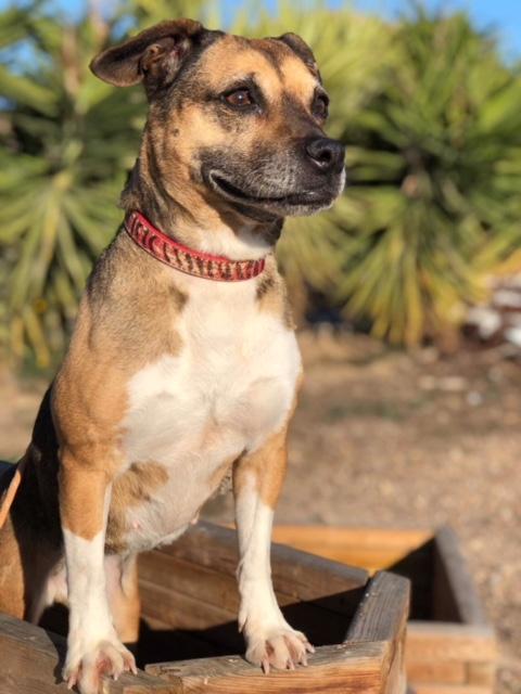 Bildertagebuch -  Ivy (jetzt Maja): eine kleine Hundelady hofft - VERMITTELT! 31333426vg