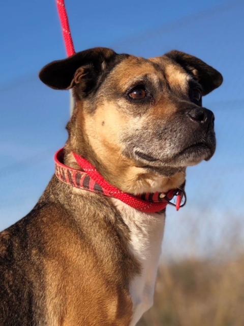Bildertagebuch -  Ivy (jetzt Maja): eine kleine Hundelady hofft - VERMITTELT! 31333432jn