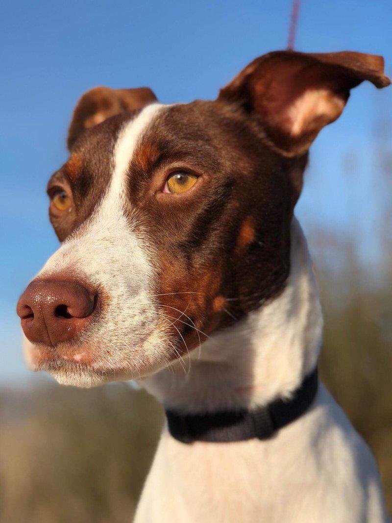 Bildertagebuch  - Kylo: ein bildschöner, eleganter, und cleverer Hund für aktive Menschen! - VERMITTELT- 31341178zm
