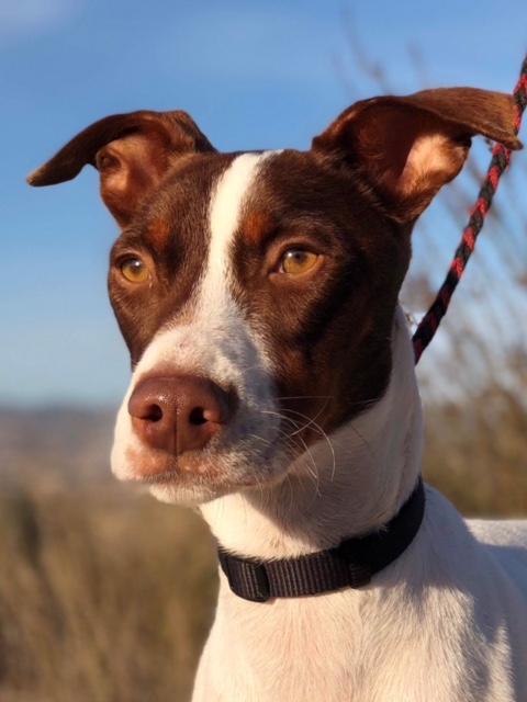 Bildertagebuch  - Kylo: ein bildschöner, eleganter, und cleverer Hund für aktive Menschen! - VERMITTELT- 31341181lu