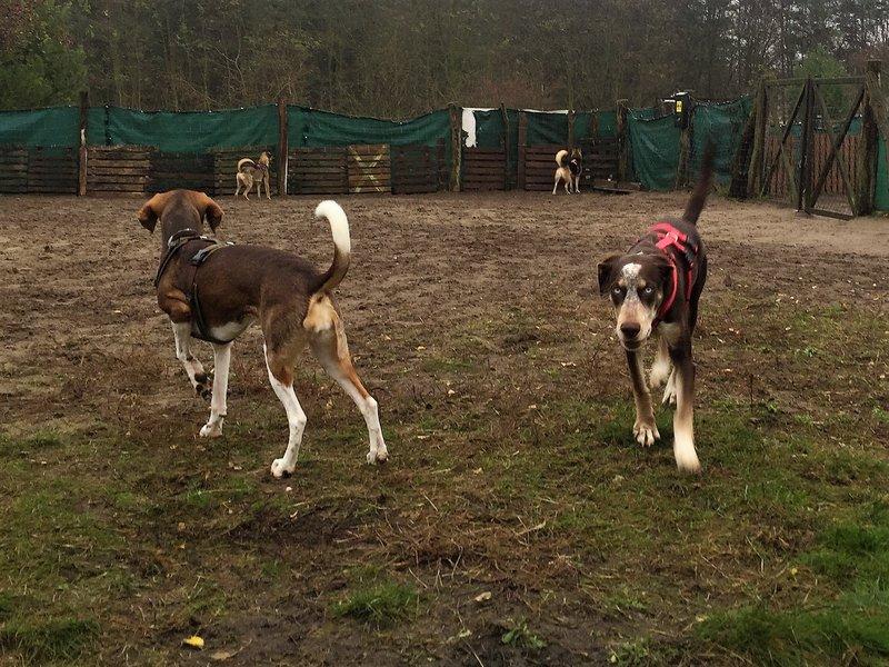 Bildertagebuch- Azul, nette sensible Hundedame mit wunderschönen blitzblauen Augen wünscht sich sehr eine Familie... - VERMITTELT! 31341424mg
