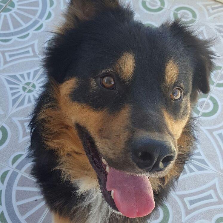 Bildertagebuch  - Ben: ein echter Hundekumpel - VERMITTELT - 31341855wc