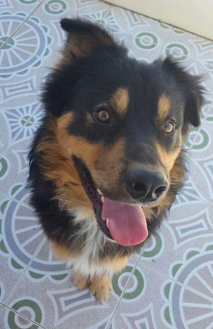 Bildertagebuch  - Ben: ein echter Hundekumpel - VERMITTELT - 31341860vr