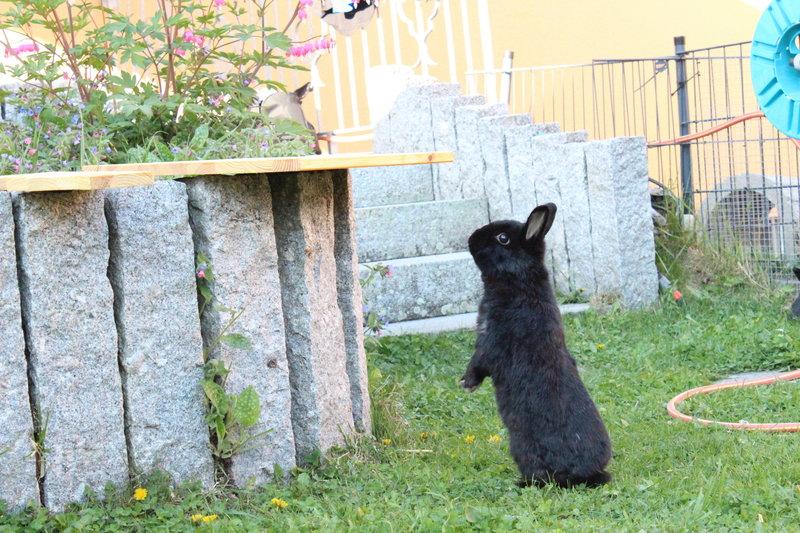 Unterschlupf Selbst Bauen Welches Holz Kaninchen