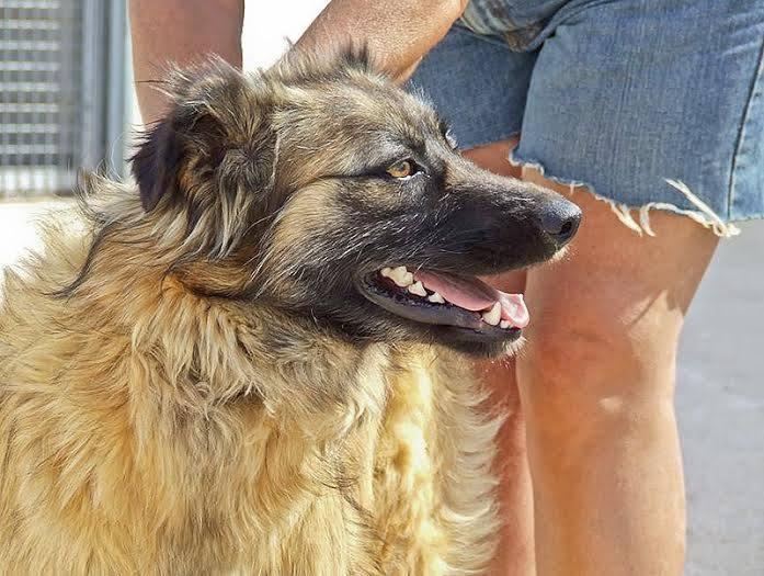 Bildertagebuch - Sirius, intelligenter hübscher Hundestern möchte so gerne endlich ein Zuhause ... 31454073sx