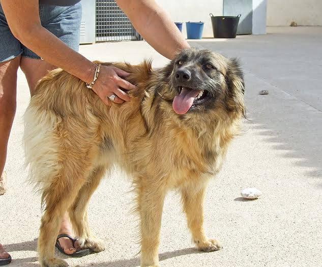 Bildertagebuch - Sirius, intelligenter hübscher Hundestern möchte so gerne endlich ein Zuhause ... 31454075fn