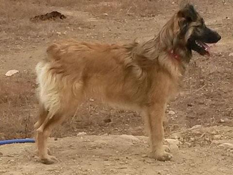 Bildertagebuch - Sirius, intelligenter hübscher Hundestern möchte so gerne endlich ein Zuhause ... 31454077ke