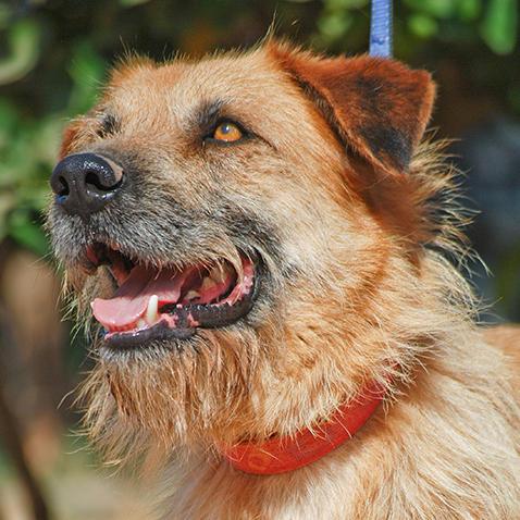 Bildertagebuch - Franko, ein ganz netter Kerl der sein ganzes bisheriges Leben in einer Pension verbracht hat,  würde so gerne ein treuer Hundekumpel werden ... 31454273ib