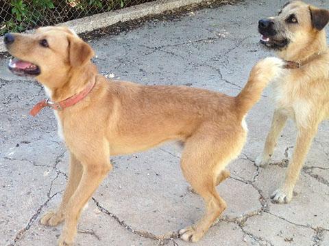 Bildertagebuch - Franko, ein ganz netter Kerl der sein ganzes bisheriges Leben in einer Pension verbracht hat,  würde so gerne ein treuer Hundekumpel werden ... 31454274mm