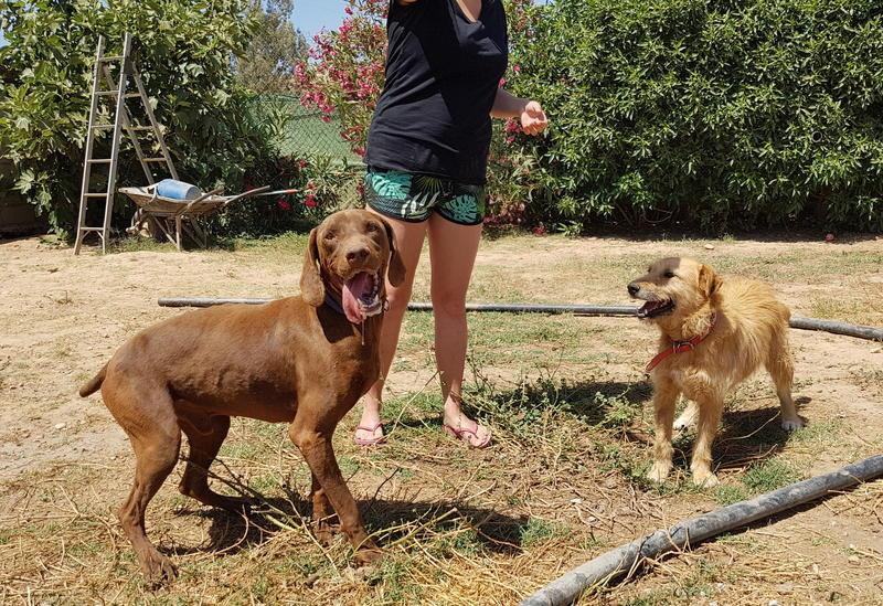 Bildertagebuch - Franko, ein ganz netter Kerl der sein ganzes bisheriges Leben in einer Pension verbracht hat,  würde so gerne ein treuer Hundekumpel werden ... 31454276ca