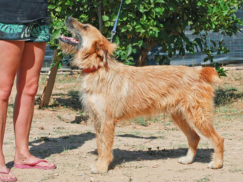 Bildertagebuch - Franko, ein ganz netter Kerl der sein ganzes bisheriges Leben in einer Pension verbracht hat,  würde so gerne ein treuer Hundekumpel werden ... 31454277eo