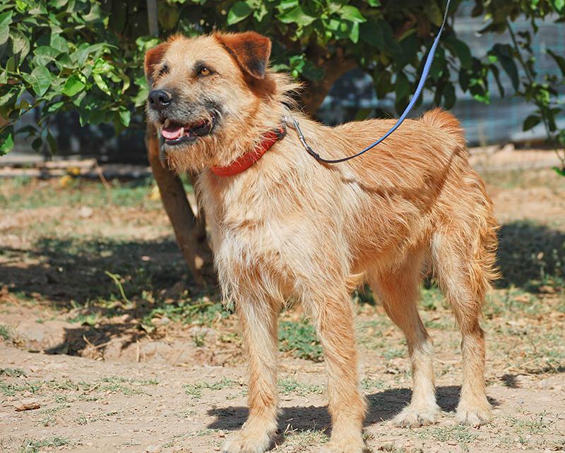 Bildertagebuch - Franko, ein ganz netter Kerl der sein ganzes bisheriges Leben in einer Pension verbracht hat,  würde so gerne ein treuer Hundekumpel werden ... 31454279vv
