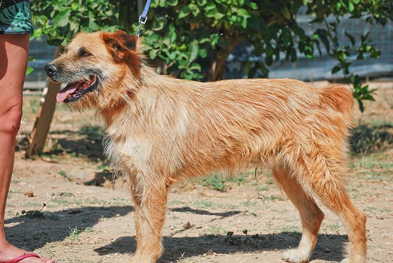 Bildertagebuch - Franko, ein ganz netter Kerl der sein ganzes bisheriges Leben in einer Pension verbracht hat,  würde so gerne ein treuer Hundekumpel werden ... 31454280ah
