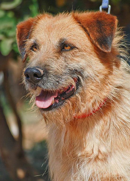 Bildertagebuch - Franko, ein ganz netter Kerl der sein ganzes bisheriges Leben in einer Pension verbracht hat,  würde so gerne ein treuer Hundekumpel werden ... 31454281rm