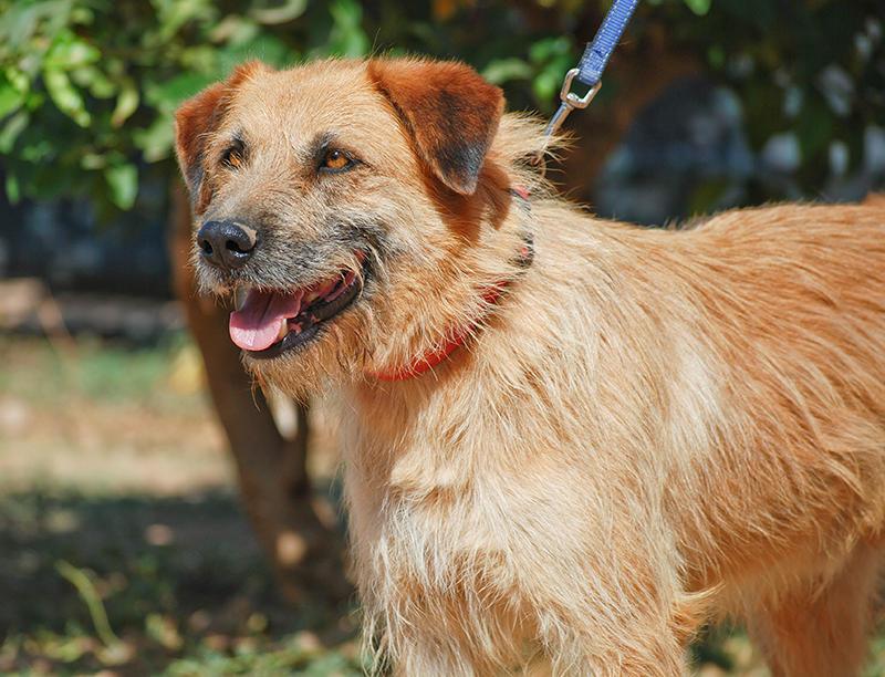 Bildertagebuch - Franko, ein ganz netter Kerl der sein ganzes bisheriges Leben in einer Pension verbracht hat,  würde so gerne ein treuer Hundekumpel werden ... 31454282rm