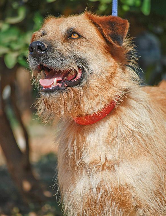 Bildertagebuch - Franko, ein ganz netter Kerl der sein ganzes bisheriges Leben in einer Pension verbracht hat,  würde so gerne ein treuer Hundekumpel werden ... 31454283rc