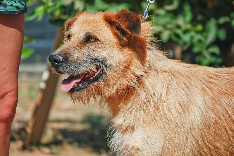 Bildertagebuch - Franko, ein ganz netter Kerl der sein ganzes bisheriges Leben in einer Pension verbracht hat,  würde so gerne ein treuer Hundekumpel werden ... 31454296ax