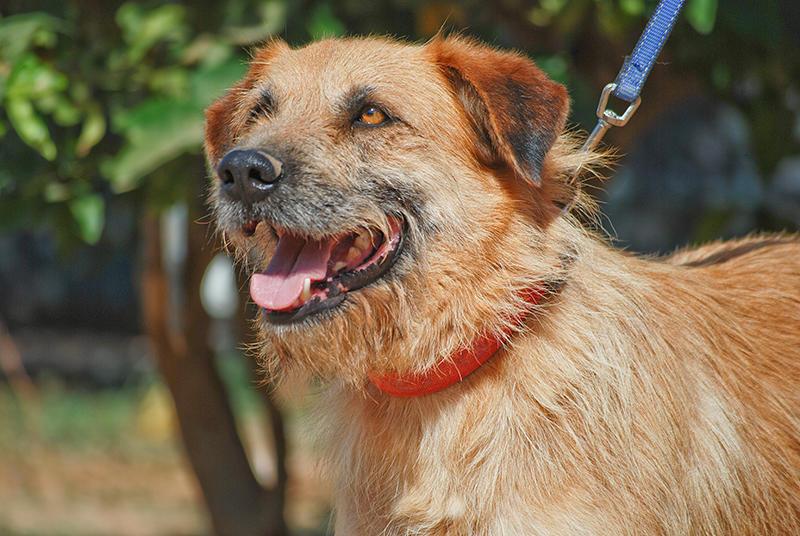 Bildertagebuch - Franko, ein ganz netter Kerl der sein ganzes bisheriges Leben in einer Pension verbracht hat,  würde so gerne ein treuer Hundekumpel werden ... 31454297wd