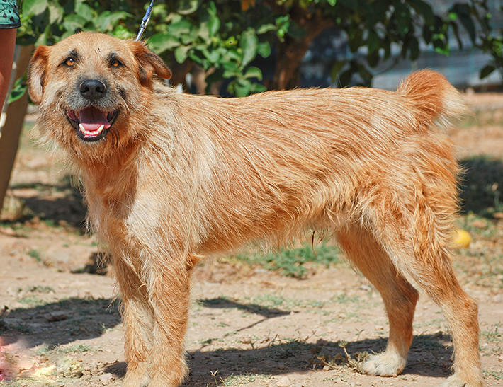 Bildertagebuch - Franko, ein ganz netter Kerl der sein ganzes bisheriges Leben in einer Pension verbracht hat,  würde so gerne ein treuer Hundekumpel werden ... 31454299sr