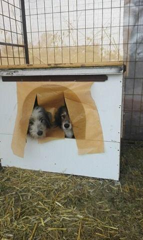 Chantal hat ein neues Zuhause gefunden 31518686os