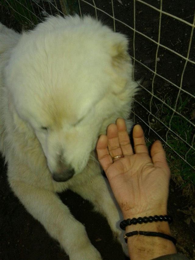 Bildertagebuch - Fetidor, ein wunderschöner Eisbär, er war in einem ganz miserablen Zustand! 31569701dg