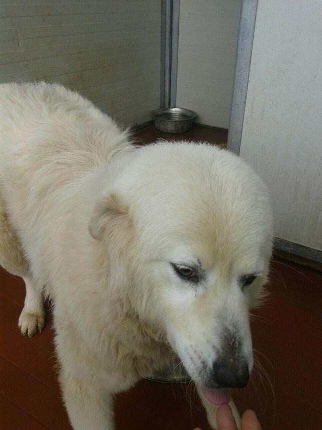 Bildertagebuch - Fetidor, ein wunderschöner Eisbär, er war in einem ganz miserablen Zustand! 31569703sy
