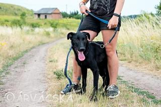Madox lebt jetzt glücklich in Ungarn! 31591775fl