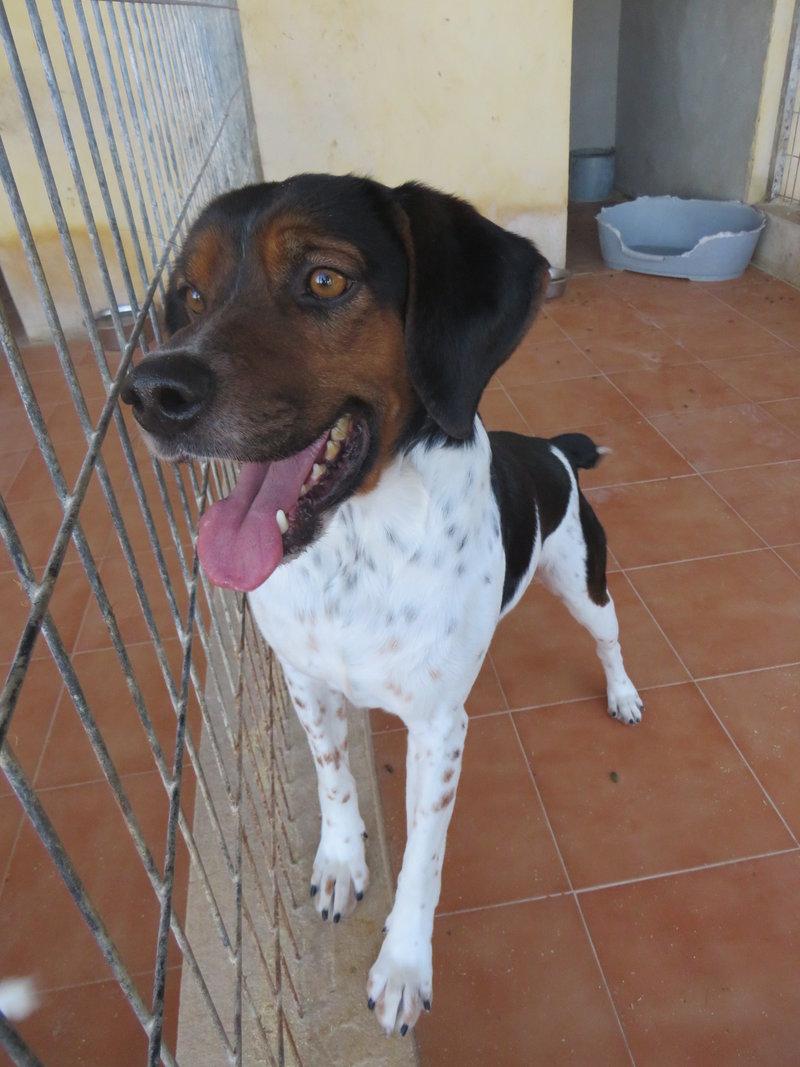 Bildertagebuch - Rio, jung, verspielt und sehr freundlich, warum setzt man so einen Hund nur aus - VERMITTELT! 31619150pj