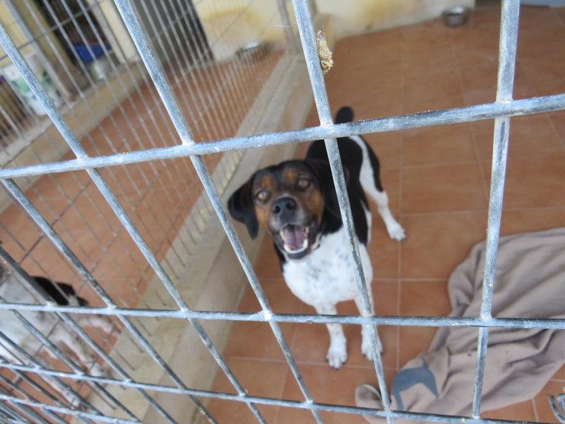 Bildertagebuch - Rio, jung, verspielt und sehr freundlich, warum setzt man so einen Hund nur aus - VERMITTELT! 31619152in