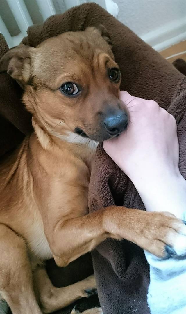 Bildertagebuch - Nacho, herziger kleiner Hundeschnuggel ...VERMITTELT! 31636566tx